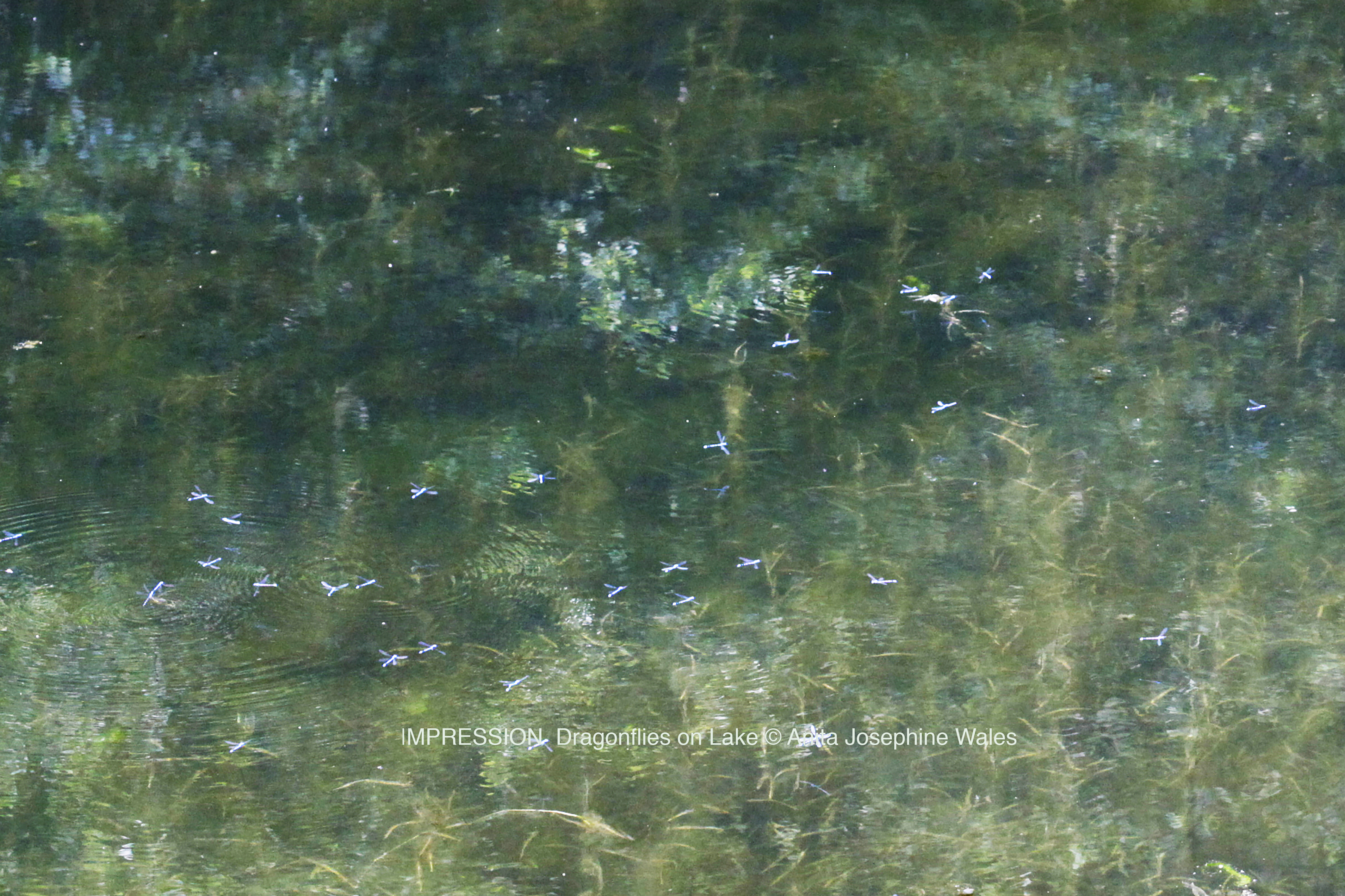 CoCreationFromTHeArt © Anita Josephine Wales _IMPRESSION Dragonflies on Lake_www.wales.dk