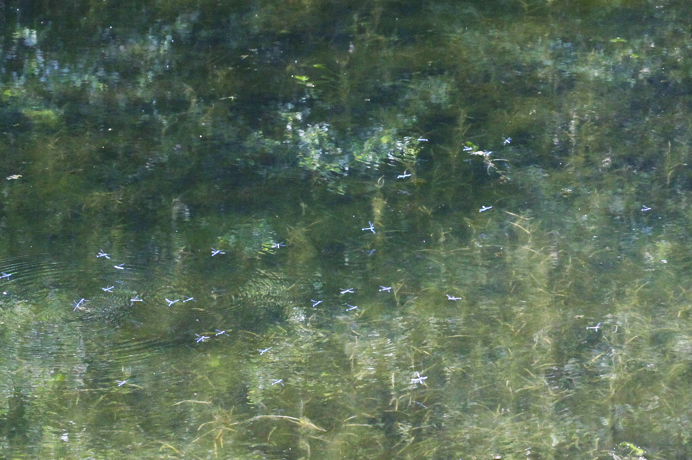 IMPRESSION, Dragonflies On Lake, Sierra National Forest, USA © 2016 Limited Edition Of 6 Giselle Print 150 X 100 Cm Hahnemühle Fine Art Baryta 325 Gr.